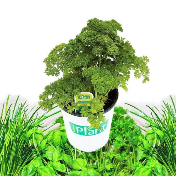 fines herbes 1 gallon