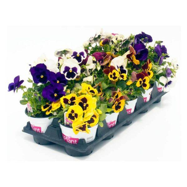 fleurs comestibles iplant
