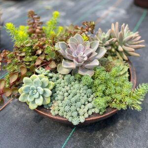 jardin succulente grand